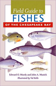 Book - Field Guide to Fishes of the Chesapeake Bay