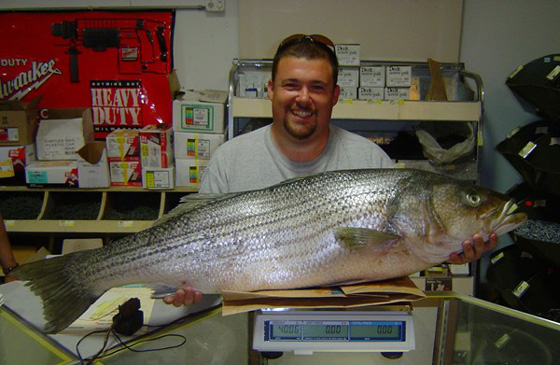 Freshwater Striped Bass