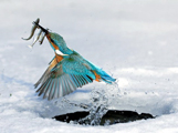 Kingfisher Ice Fishing