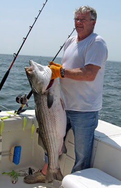 Chesapeake Striper
