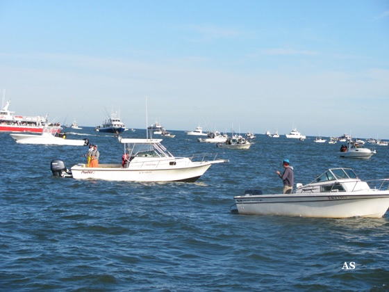 Surf Fishing for 