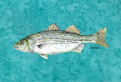 Striped Bass Placemat