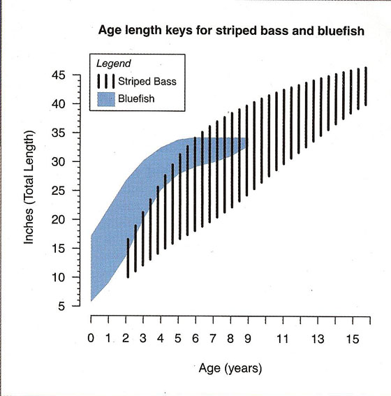 Striped Bass and Blefish Average Length vs Age Chart