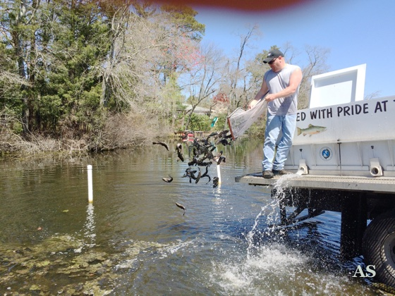 Trout Stocking NEW Jersey